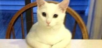แมวตลกๆ ในปี 2015