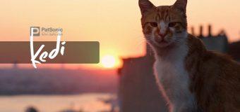 Kedi เมืองแมว
