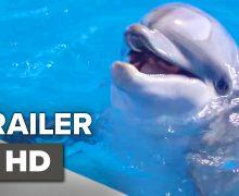 Bernie The Dolphin เบอร์นี่ โลมาน้อยหัวใจมหาสมุทร