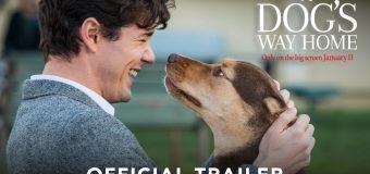 A Dog's Way Home เพื่อนรักผจญภัยสี่ร้อยไมล์