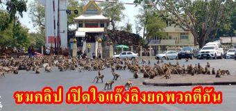 ชมคลิป เปิดใจแก๊งลิงยกพวกตีกัน ศึก 4 แก๊ง ลิง ลพบุรี ยกพวกตะลุมบอนกันกลางถนน