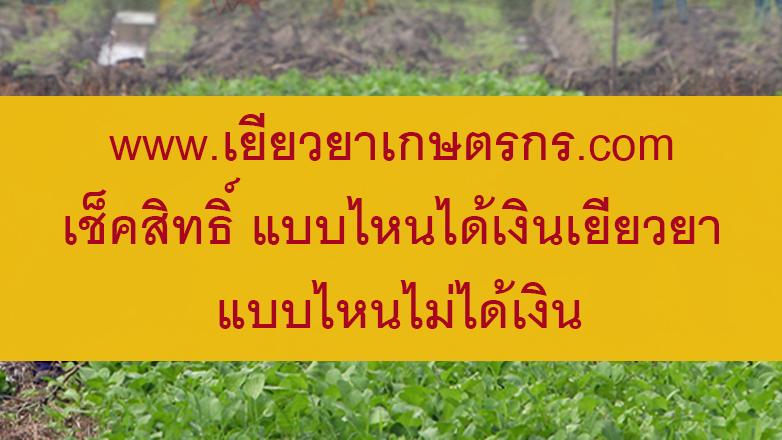 www.เยียวยาเกษตรกร.com เช็คสิทธิ์ แบบไหนได้เงินเยียวยา แบบไหนไม่ได้เงิน